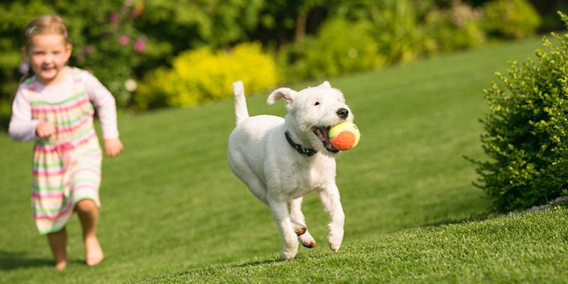 girl runs with white dog through green grass